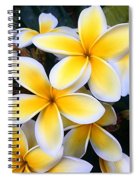 Yellow And White Plumeria Spiral Notebook