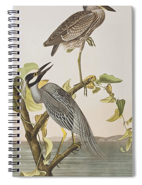 Yellow Crowned Heron Spiral Notebook