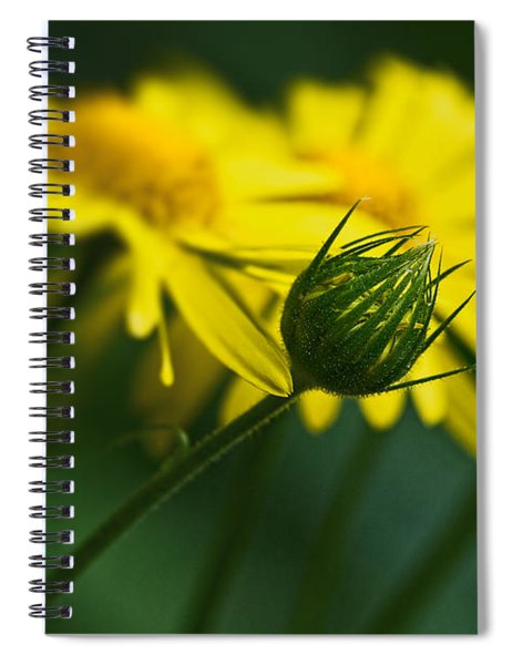 Yellow Daisy Bud Spiral Notebook