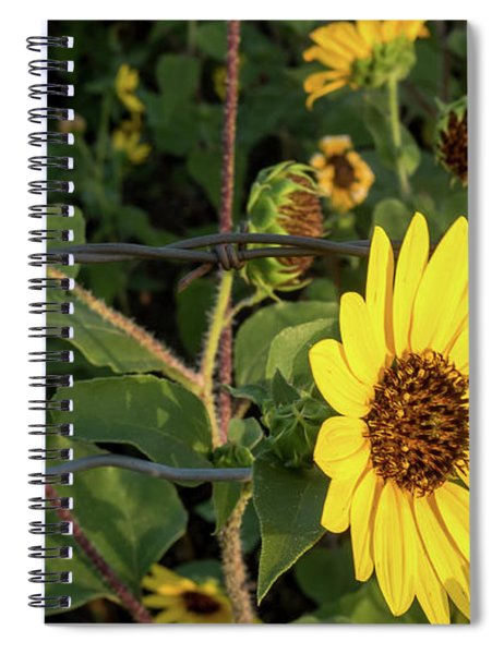 Yellow Flower Escaping From A Barb Wire Fence Spiral Notebook