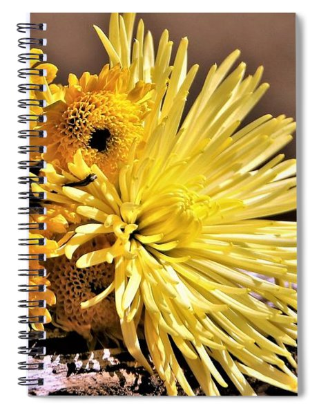 Yellow Mums In Morning Light Spiral Notebook