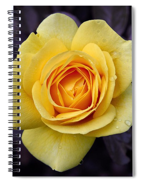 Yellow Rose Square Spiral Notebook