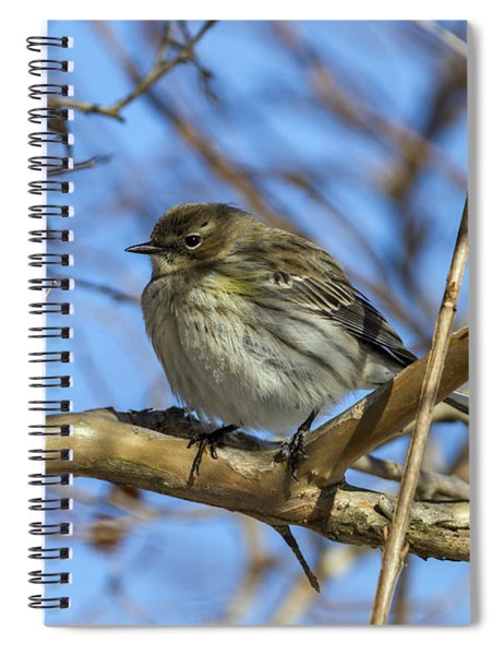 Yellow-rumped Warbler Perched Spiral Notebook