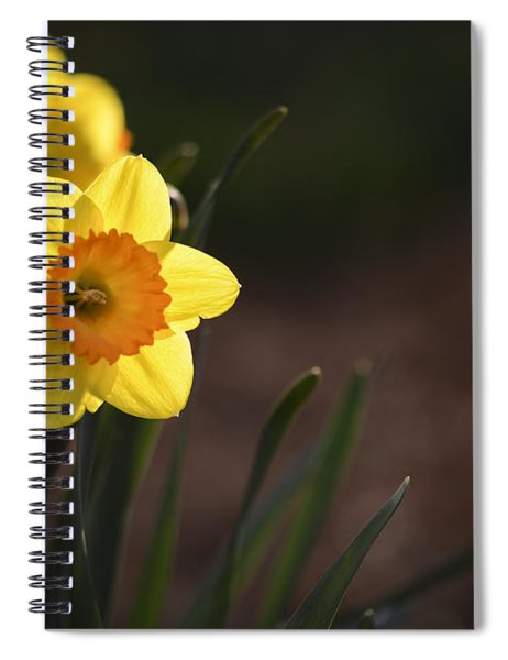 Yellow Spring Daffodils Spiral Notebook