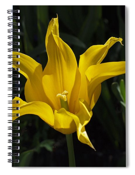 Yellow Star Tulip Spiral Notebook