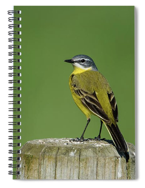 Yellow Wagtail Perching On The Roundpole Spiral Notebook