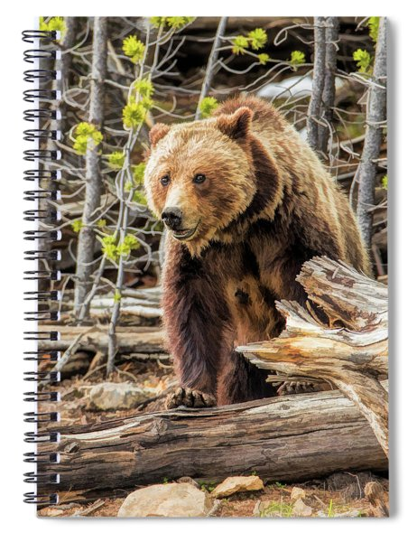 Yellowstone Grizzly Bear Spiral Notebook by Christopher Arndt