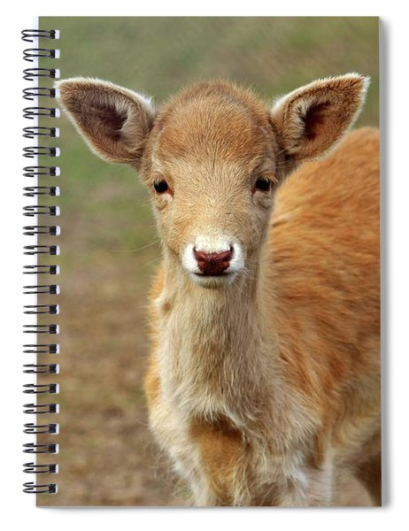 Young And Sweet Spiral Notebook