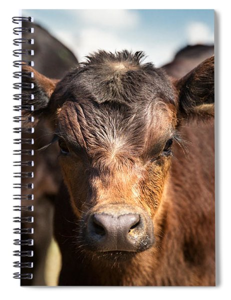Young Angus Spiral Notebook