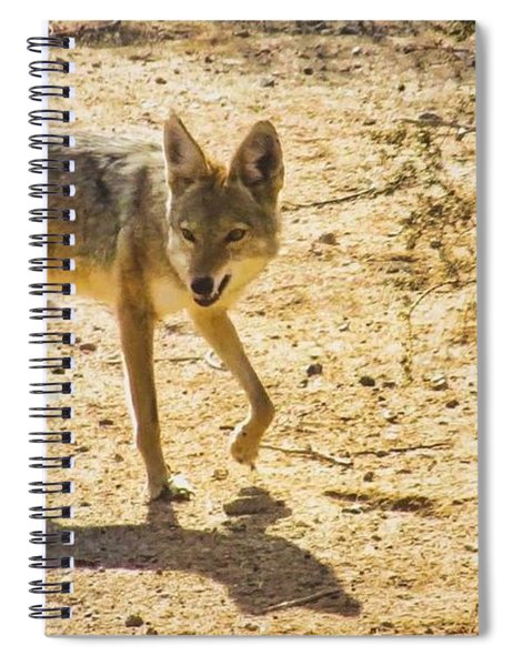 Young Coyote And Cactus Spiral Notebook
