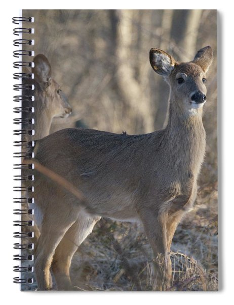 Young Deer In A Pack Spiral Notebook