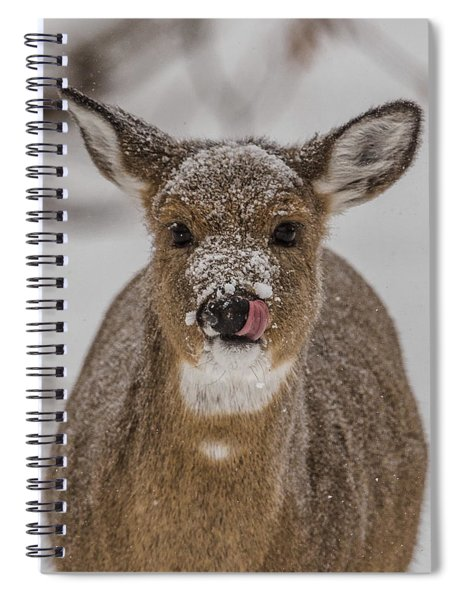 Young Deer Spiral Notebook