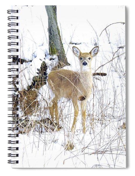 Young Doe And Spring Snow Spiral Notebook