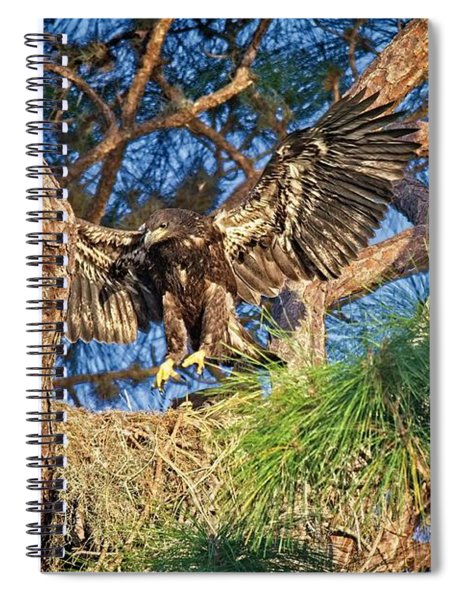 Young Eagle On Nest Spiral Notebook