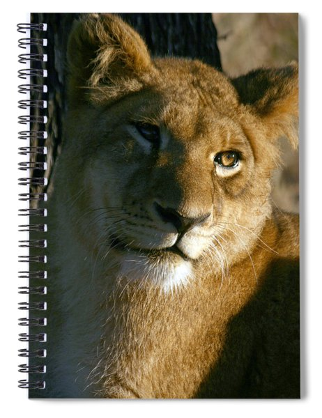 Young Lion Spiral Notebook