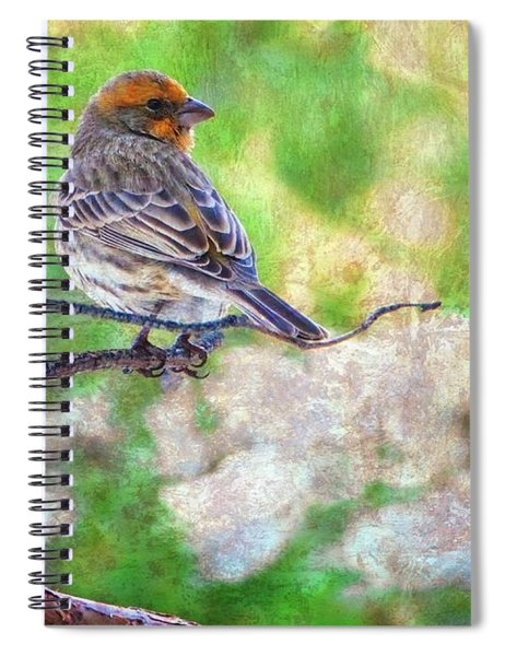 Young Male House Finch Spiral Notebook