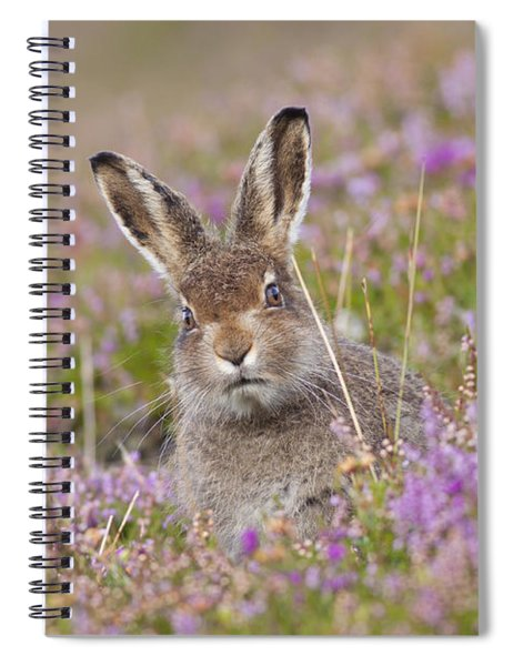 Young Mountain Hare In Purple Heather Spiral Notebook