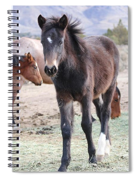 Young Mustang Spiral Notebook