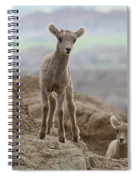 Youthful Explorers Spiral Notebook