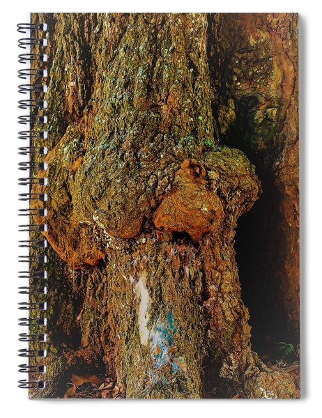 Z Z In A Tree Spiral Notebook