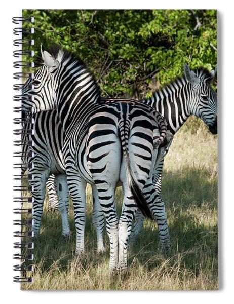 Three Zebras Spiral Notebook