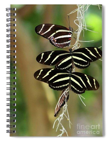 Zebra Butterflies Hanging On Spiral Notebook