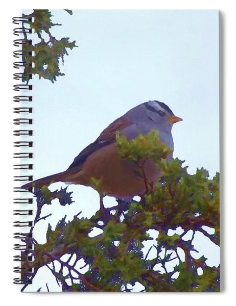 White Crowned Sparrow In Cedar Spiral Notebook