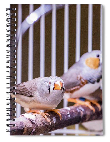 Zebra Finch Pair Spiral Notebook