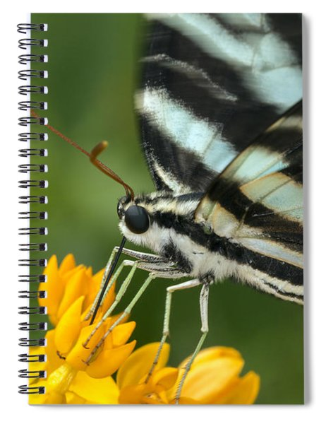 Zebra Swallowtail Drinking On The Fly Spiral Notebook