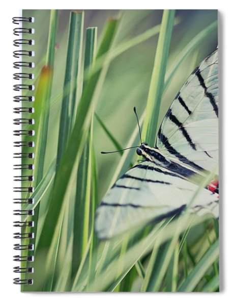 Zebra Swallowtail Spiral Notebook