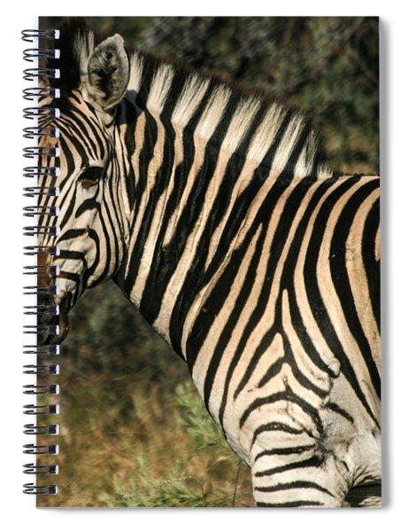 Zebra Watching Spiral Notebook
