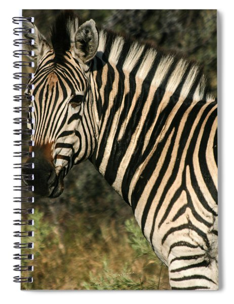 Zebra Watching Sq Spiral Notebook