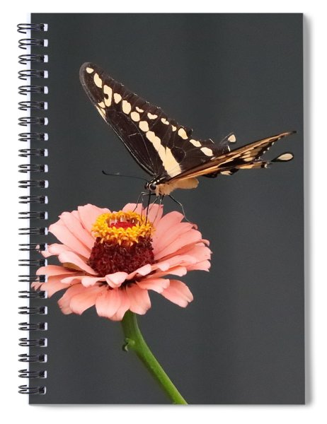 Zinnia With Butterfly 2702 Spiral Notebook