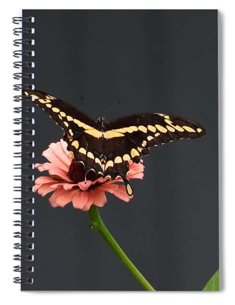 Zinnia With Butterfly 2708  Spiral Notebook