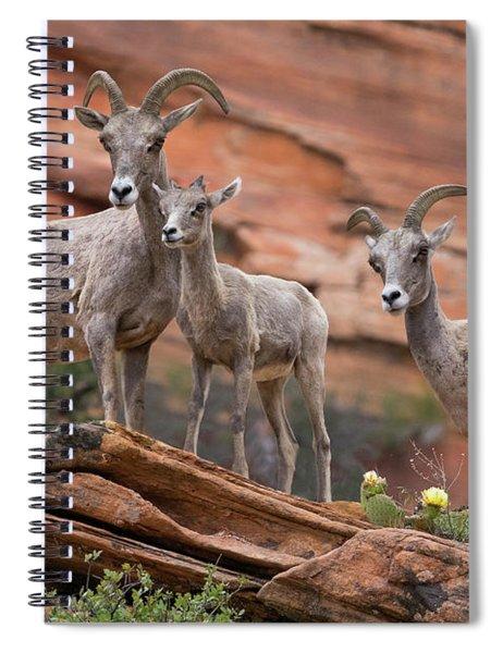 Zion Big Horn Sheep Spiral Notebook