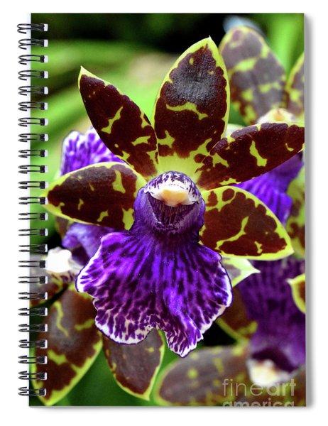 Zygopetalum Orchid Spiral Notebook