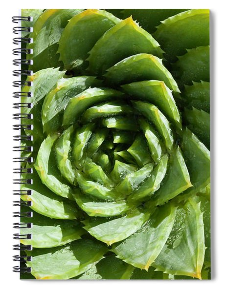 Aloe_polyphylla_8536.psd Spiral Notebook