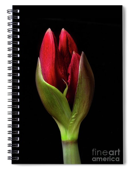 Amaryllis 'merlot' Spiral Notebook