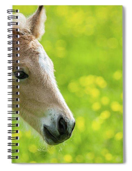 Amber Foal Portrait Spiral Notebook by Scott Lyons