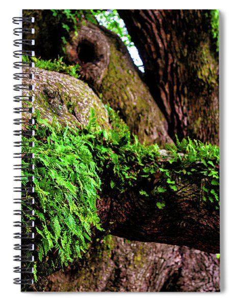 Angel Oak Tree Branches Spiral Notebook