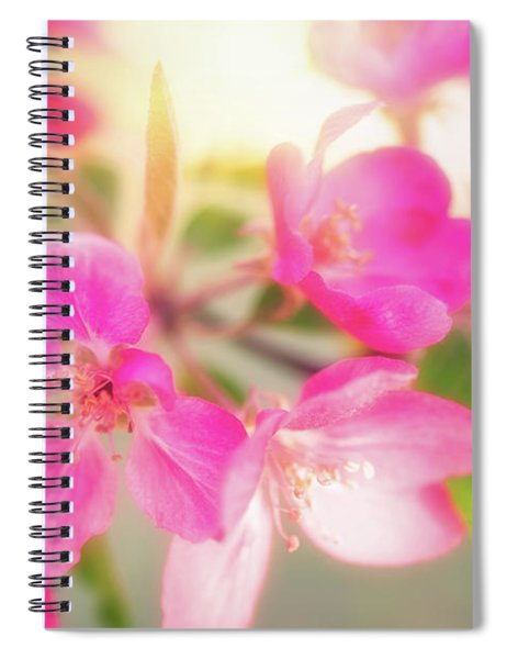 Apple Blossom 6 Spiral Notebook