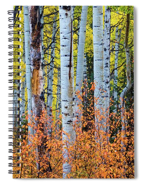 Autumn In Color Spiral Notebook