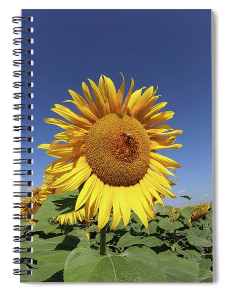 Bee On Blooming Sunflower Spiral Notebook