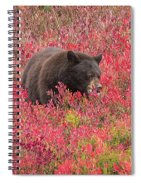 Berries For The Bear Spiral Notebook