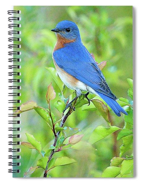 Bluebird Joy Spiral Notebook