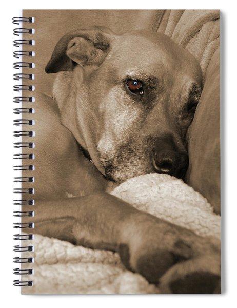 Boxer Varon Portrait 2 Spiral Notebook