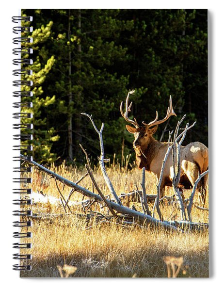 Bull Elk  Spiral Notebook
