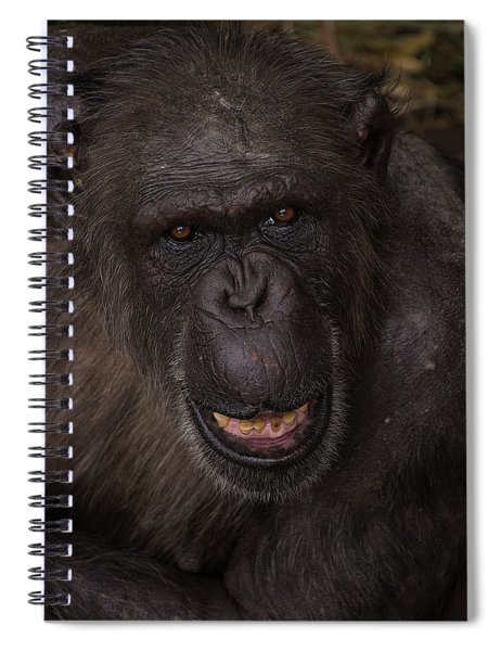 Chimpanzee Spiral Notebook