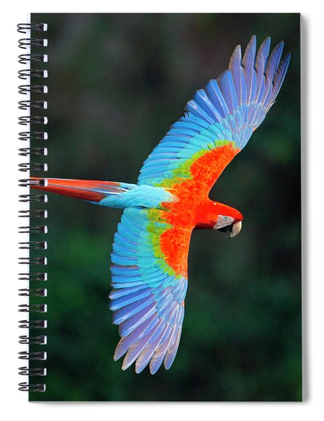Close Up Of Flying Red-and-green Macaw Spiral Notebook