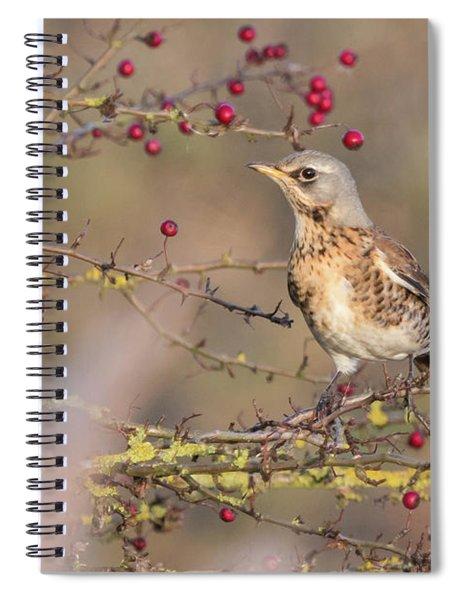 Fieldfare Spiral Notebook